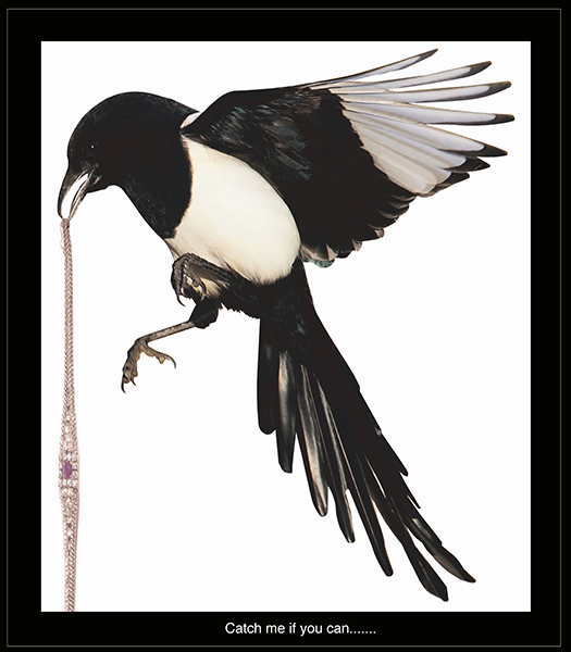 Magpie with bracelet copy